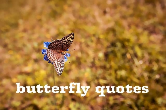 Top 100 Best Butterfly Quotes 2019 Lets Fly Like A Butterfly